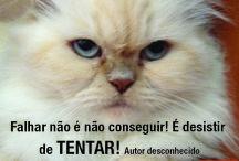 Gata Luana / Vamos tentar? #emotionalcoaching  www.emotionalcoaching.pt