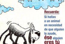 ANIMALES / Animalista, NO AL MALTRATO ANIMAL.