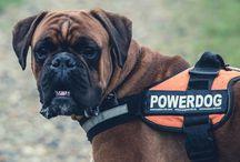 Pet Training / Tips for correct pet training