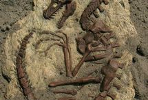 Fossils etc... / by Heidi Sweigart