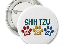 Puppies & Animal Kingdom / Winston is my shih-tzu Boo!  Luv Me Some Him!  <3 / by Kendria Hampton