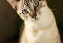 Cats / Cats cats cats