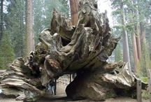 Redwood Vacation