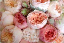 Pretty flowers  / by Ashley Fallin Deering