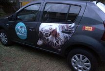 Purina One Cat Food / A campaign for the cat lovers out there!