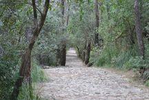 Cami des Correu / Wine routes and trekking with VullVi. www.wineroutesmallorca.com www.vullvi.com