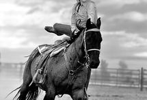 western horses ❤