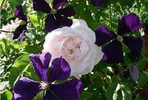 Combi flowers