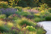 Grass & Wild Gardens