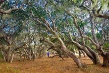 KeepItWild / #Wild #Nature #wilderness spirit in the land #SacredSpace #OpenSpace #Creation