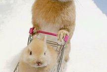 Cute animals / tato nastenka je pre ludi ktory maju radi zvieratka tak nevahajte pozrite si ju