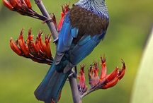 New Zealand Native Birds / Native birds from New Zealand