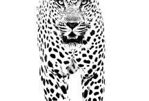 guepardo tattoo