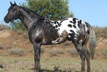 bunte Pferde