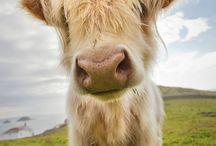 Dulces y maravillosos / Mas dulces y maravillosos animales