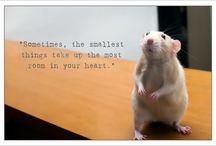 Ratten - Rats