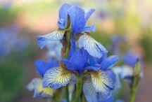 Royal Botanical Gardens / Photos from the Royal Botanical Gardens in Burlington, Ontario