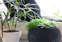 Pet Friendly Plants / The Sill team's favorite pet-friendly plants for home and office. All the houseplants below are completely non-toxic or have very low toxicity levels.  / by The Sill