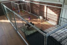 Dog's kennel / My ideas of new kennels for my huskies