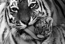Nature / Our planet Earth & it's wonderful wildlife.