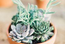 Kaktusy~cactus