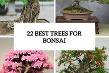 Bonsai, ein Baum fürs Leben.