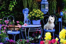Tiny Decks, Patios & Gardens / by Tedi Mercer