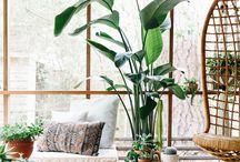 plantes interior