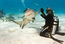 Sharks / by Kim Missler Bodette