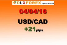 Daily Forex Profits Performance 04/04/16