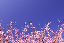 Spring forward / by Susan Ware