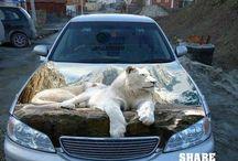 Automobile Art / Art on cars, trucks, motorcycles, ect