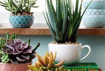 Vasos de plantas suculentas