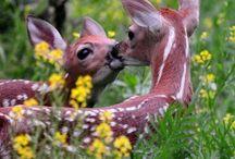 Faon , Bambi