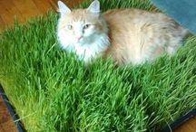 Cat grass cat runs