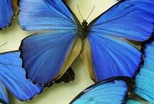 Butterflies / by Stacey Fox Kingston