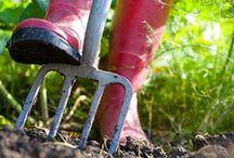 Jardin / Conseils pour le jardinage
