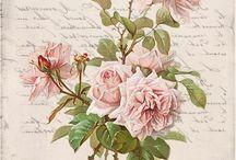 transzfer virág