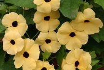 My Carden  flowers & animals/ Puutarhani