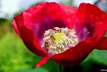 Foto kursus / Fantastiske billeder fra foto kursus med haven i centrum...