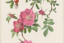 immagini botanica