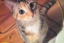 Typical cat behaviour! :D <3