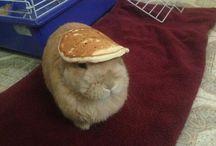 Rabbit/Bunny care