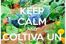 HomeGrown / Veggie Garden