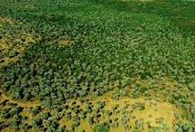 Preserve os Butiazais de Tapes - Conservation Butiazais of Tapes / Esta região, de grande importância em termos de biodiversidade. Está localizada na cidade de Tapes/RS - Brasil.  This region is of great importance in terms of biodiversity. It is located in the city of Tapes/RS - Brazil.