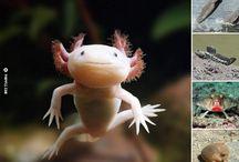 Pinpple Animal / Trending Animal Stories On The Web
