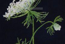 Fleurs Iris et Roses trémières