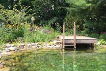 Natural swimming pond / fürdőtó