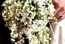 Wedding / by Noel