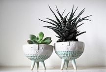 + P L A N T S / Get planting! Beautiful cacti, flowers, succulents, foliage and more!